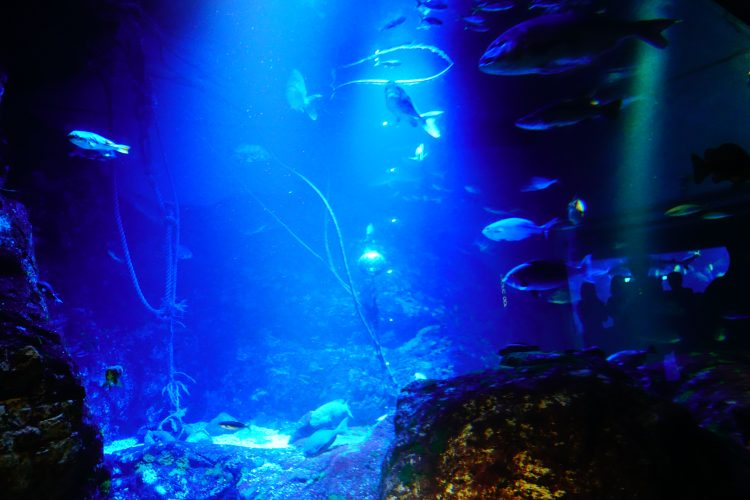 大阪の海遊館、夜のライトアップ