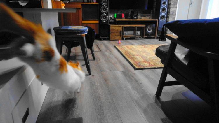 短足猫マンチカンとボール