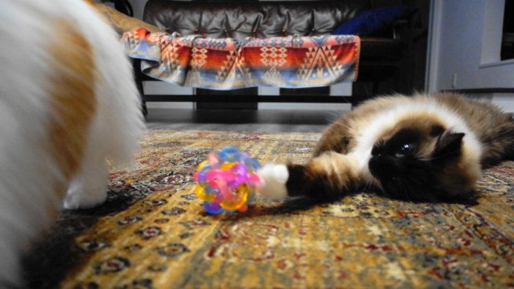 猫のおもちゃボール