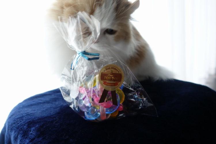 短足猫マンチカンのパルさんと猫おもちゃボール