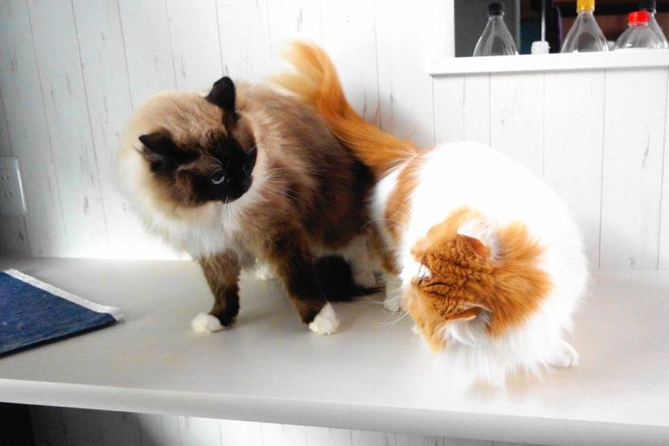 2匹の猫の喧嘩