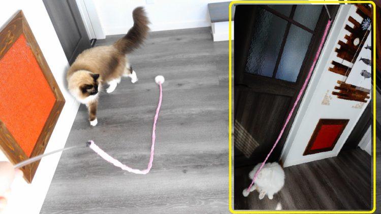 猫のおもちゃと2匹の猫