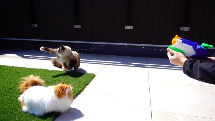 猫と水鉄砲
