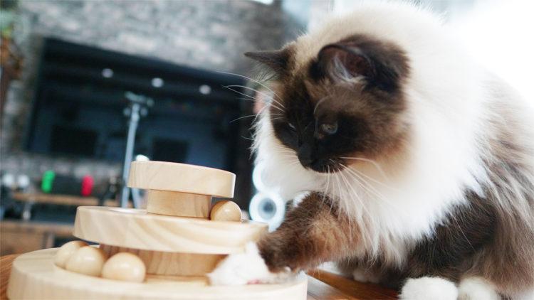 猫おもちゃの木のボール