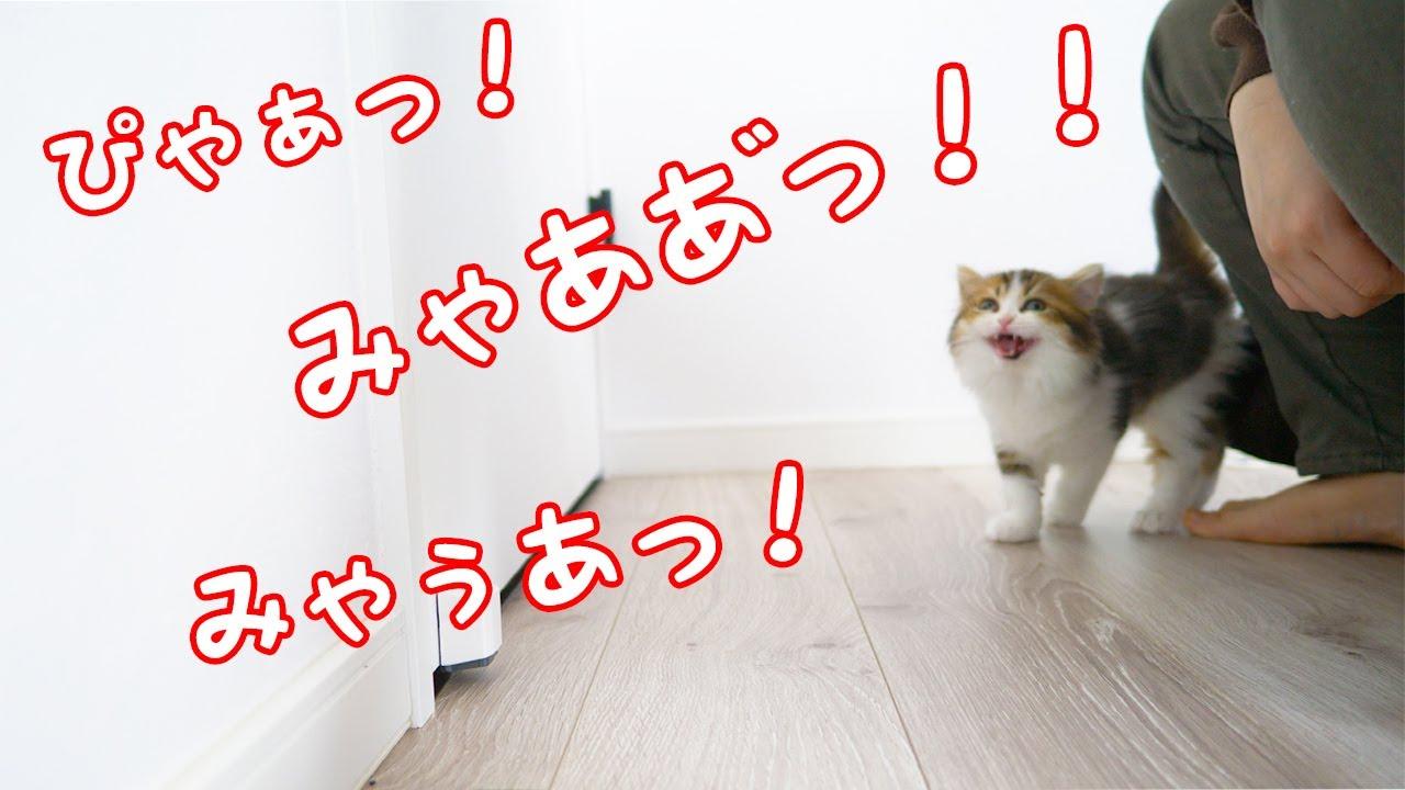 子猫の鳴き声動画