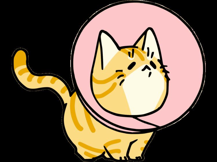 猫用エリザベスカラー